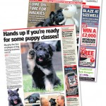 dog business featured in the press, Happy Dog Days