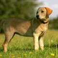 Stowmarket puppy photos