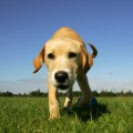 Stowmarket puppy photographs
