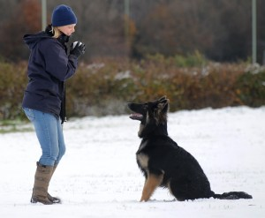 Suffolk Dog Training