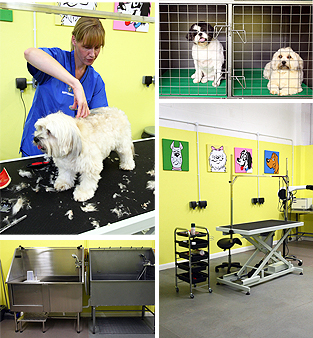 Dog Grooming Suffolk