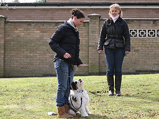 Dog Training in Suffolk