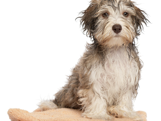 Dog Grooming in Suffolk