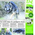 Happy Dog Days in the East Anglian Daily Times