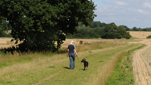 Suffolk Dog Walker
